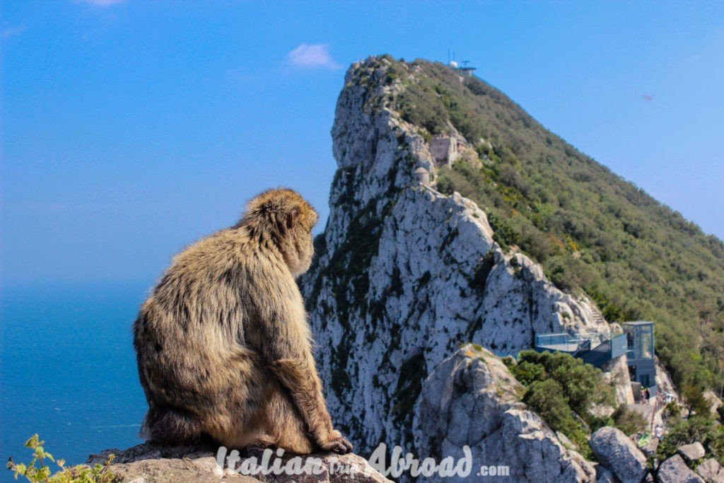 Monkey Rock Gibraltar - For an epic day trip from malaga