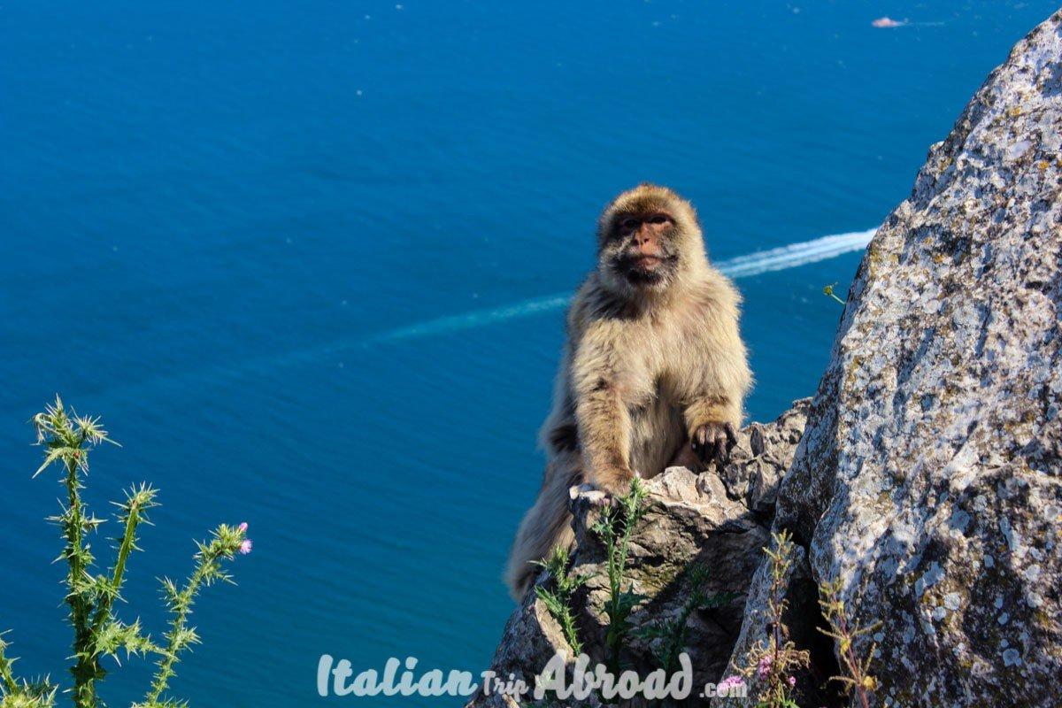 1 day in Gibraltar - Tour of Gibraltar - Monkeys of Gibraltar