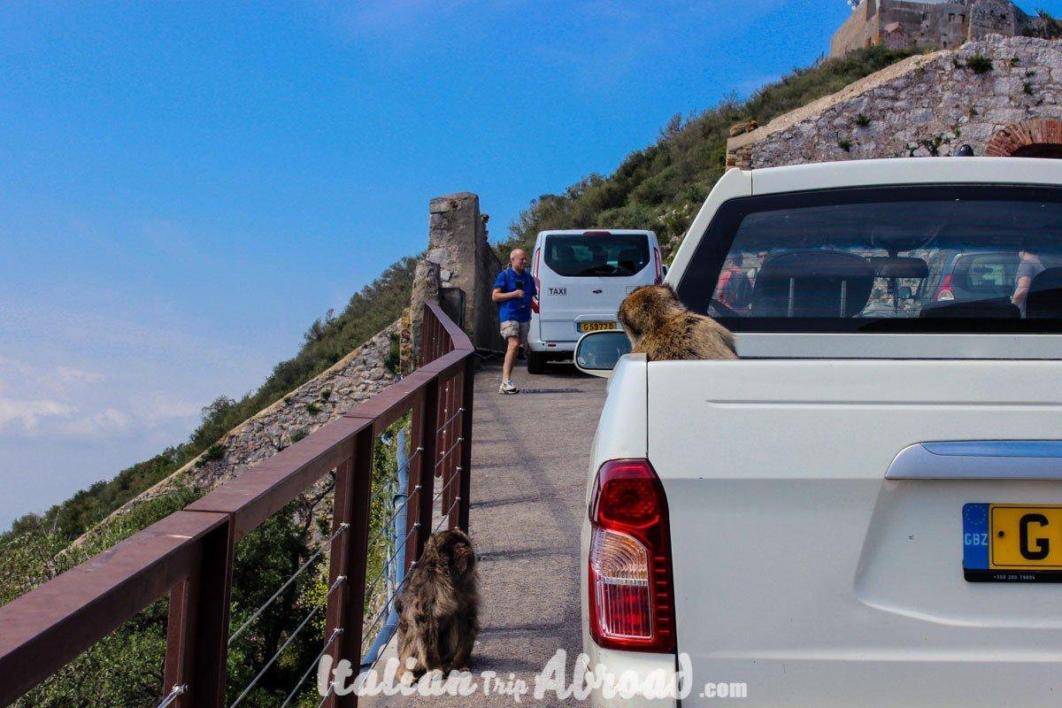 1 day in Gibraltar - Tour of Gibraltar0018
