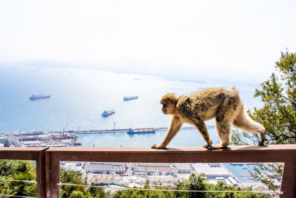Gibraltar in a day! Experiences in Spain ! Spanish bucket list