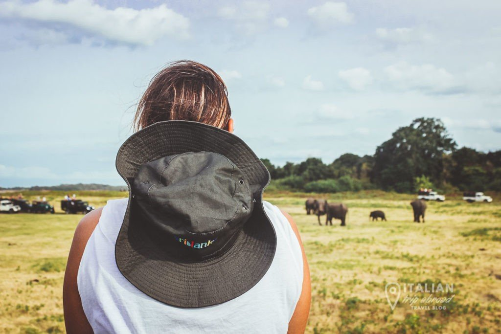 Safari ride at Minneria National Park
