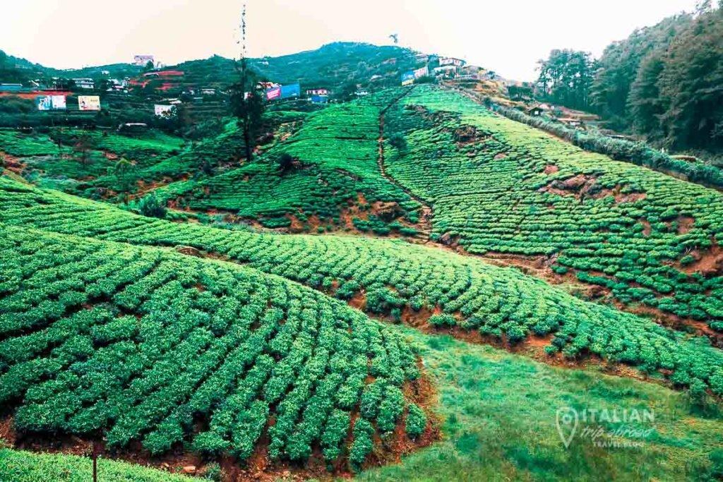 Newara Elya Tea Plantations Experience Sri Lanka