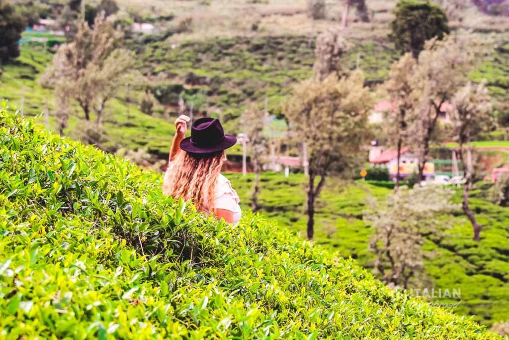 Best Tea plantation hotels in Sri Lanka