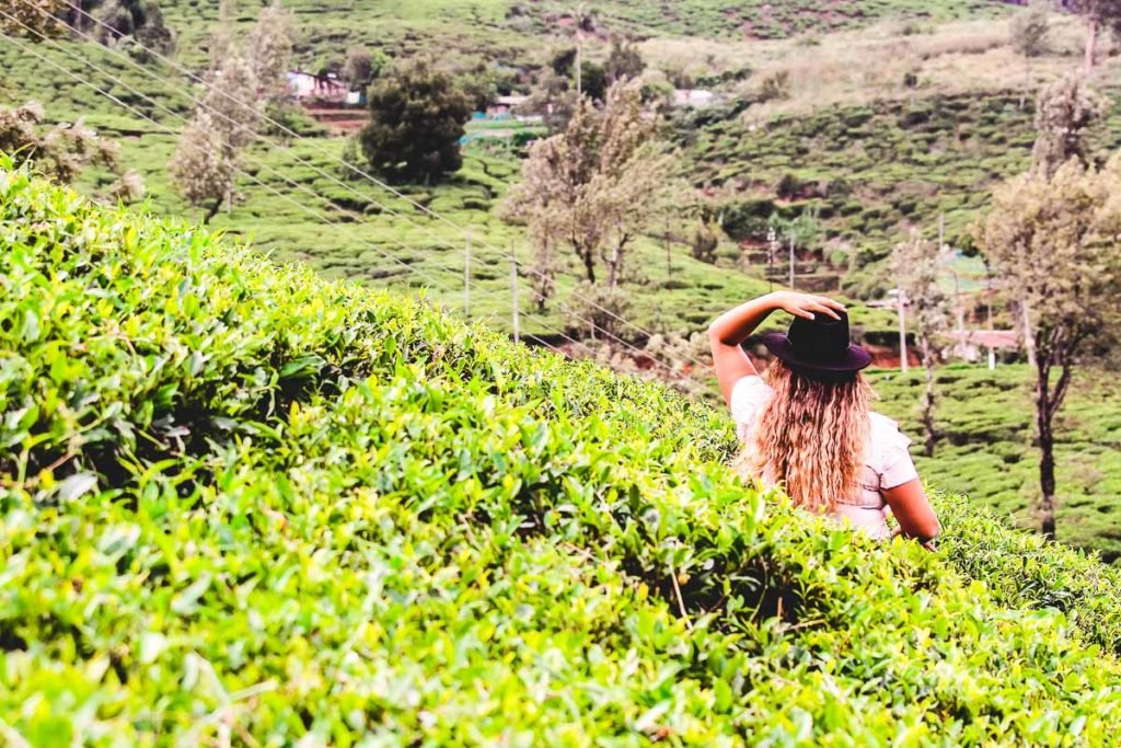 Sri Lanka Bucket list: Visit a tea field