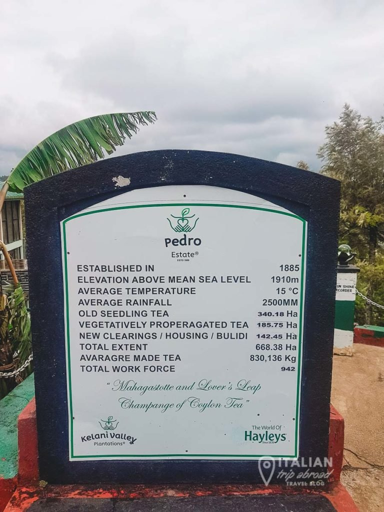 Pedro Estate - Tea Plantation in Nuwara Eliya and Tea factories tour
