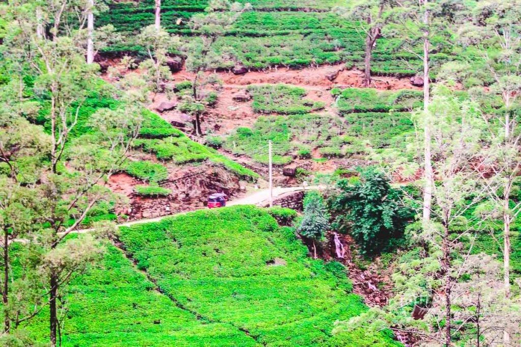 Lipton tea plantations in Nuwara Eliya