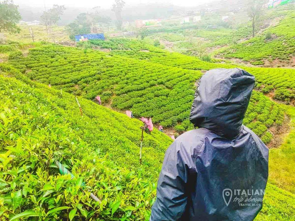 Best tea plantations in Sri Lanka
