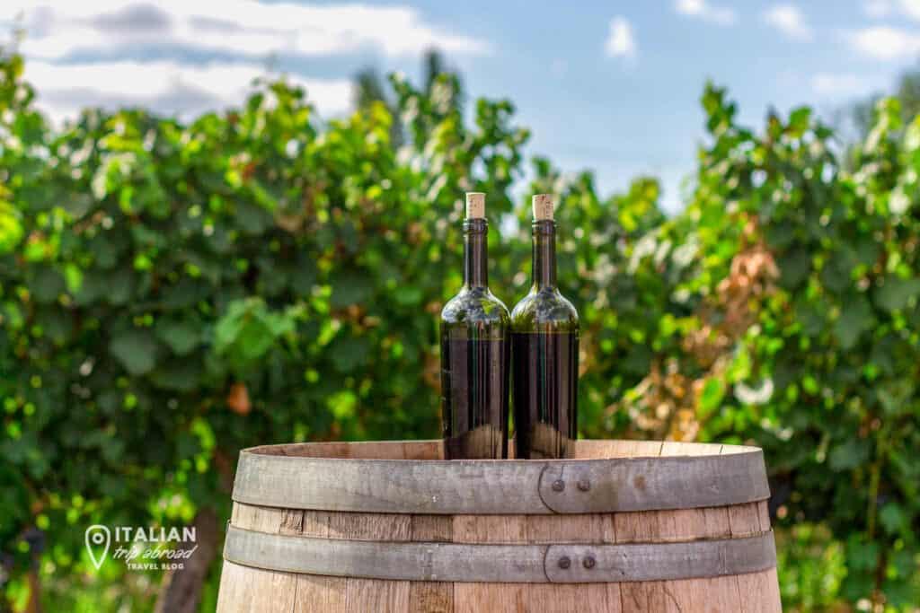Best wine tours in Puglia - Taste amazing wine in a vineyeard in Puglia